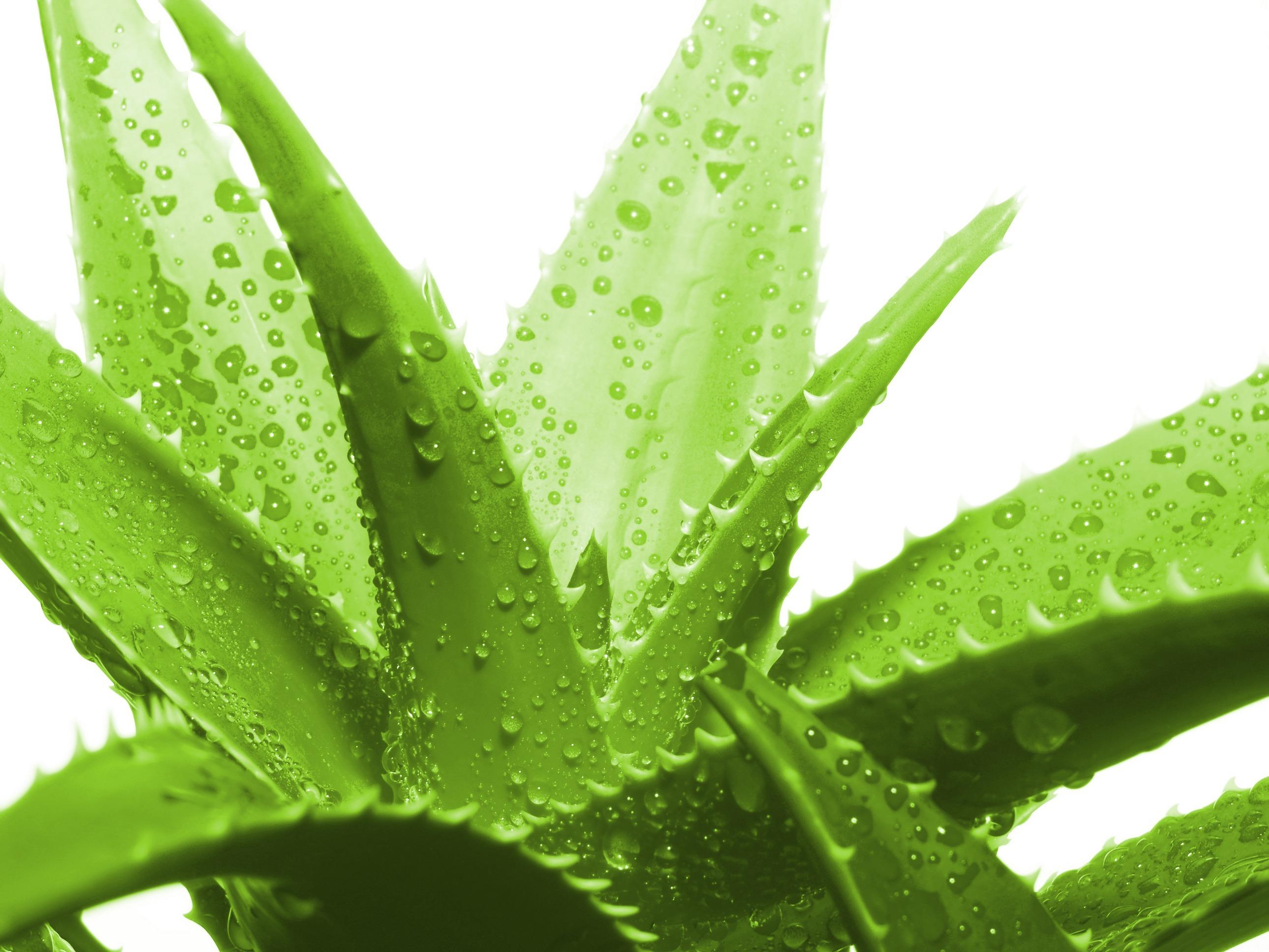 Boisson Concentrée à l'Aloe Vera Herbalife (2 saveurs disponibles)